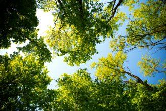 4 voordelen van groener vrachtvervoer