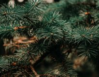 Kerstboom nieuws!