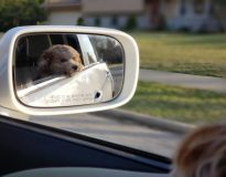 4 voordelen van je huisdier bij je hebben op de weg
